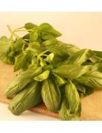 Seeds - Basilic de Gênes