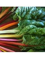 Seeds - Bette à cardes Rainbow mix