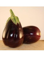 Seeds - Aubergine black beauty