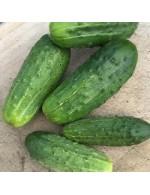 Seeds - Pickles National Pickling