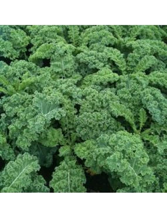 Seeds - Kale - Vates