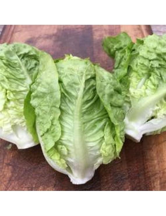 Seeds - Lettuce sucrine