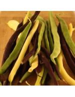 Seeds -  Snap Pole Bean Mix