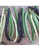 Seeds - Snap Bush Bean Mix