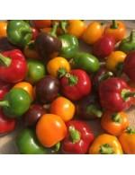 Seeds - Hot Pepper Bomb Mix