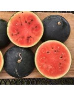 Seeds - Blacktail Mountain Watermelon