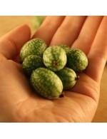 Seeds - Mouse Melon