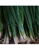 Seeds - Onion - Evergreen