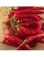 Seeds - Hot Pepper - Red Rocket
