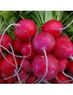Seeds - Raxe radish