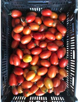 Italian field tomatoes (20lbs)