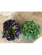 Butter Lettuce green or red