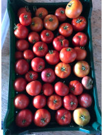 Field beef Tomato 20 (lbs) for canning