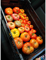 15lbs Greenhouse Tomato