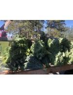 Kale Purple or Green organic 142gr 5oz