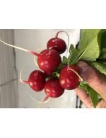 Radish (Red) organic