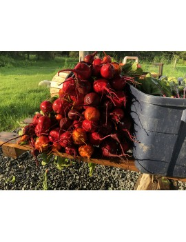 Beets (Red bunch)