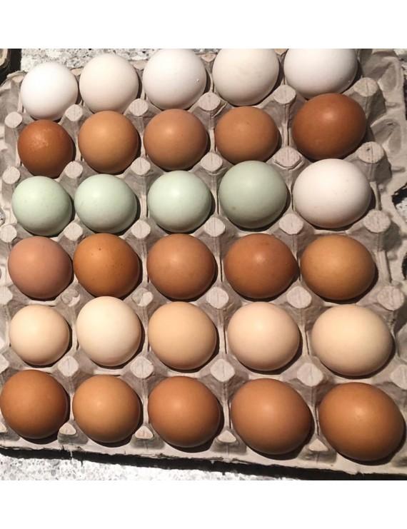 Color Eggs, (Free-range eggs)
