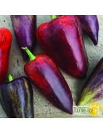 Seeds - Sweet peppers violet sparkle