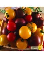 Seeds - mix cherry tomato