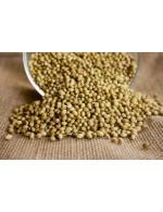 Seeds coriander