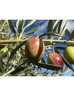 Olive Oil from Mediterranee( from Bulk)