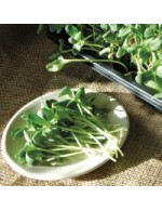 Sunflower sprouts - organic