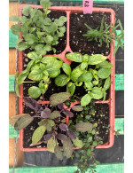 Fines herbs mixed basket
