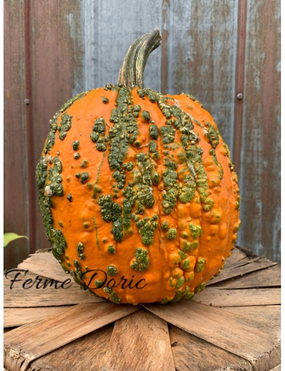 Green Warts Pumpkin