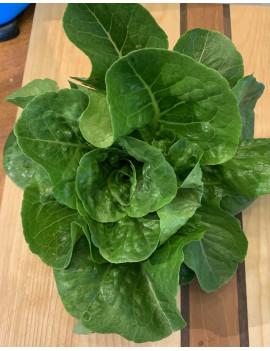 Small lettuce romaine