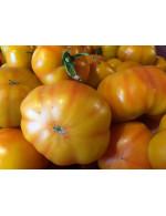 Tomatoes, yellow field