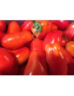 Tomatoes, Italian type
