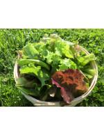 Lettuce Salad Mix