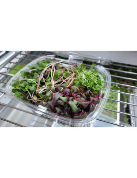 Beet, radish, clover & kohlrabi Microgreens
