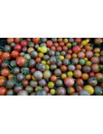 Cherry Tomatoes bag