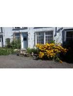herbe de blé Les Jardins de Marie-Claire
