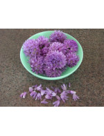 Chive flowers-organic