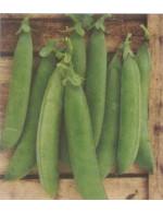 Snow peas – organic