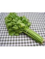 Celery – organic