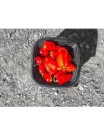 Habanada hot peppers – organic