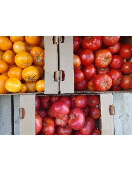 Field tomatoes by the case - organic