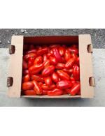 San Marzano italien tomatoe per case – organic