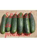 2 to 7 day old cucumbers – organic