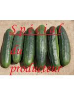 2 to 7 day old cucumbers – organic
