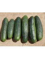 5 Field cucumber – organic