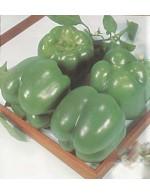 Sweet Green Bell Pepper – organic
