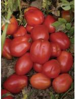 Roma italien tomatoe – organic