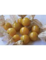 Ground Cherry – organic  and sorted