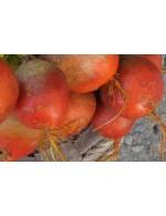 Yellow beets – organic