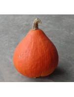 Red Kuri squash – organic Sold by weight